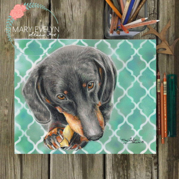 pet portraits by mary evelyn